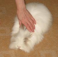 Кролик Эмиль